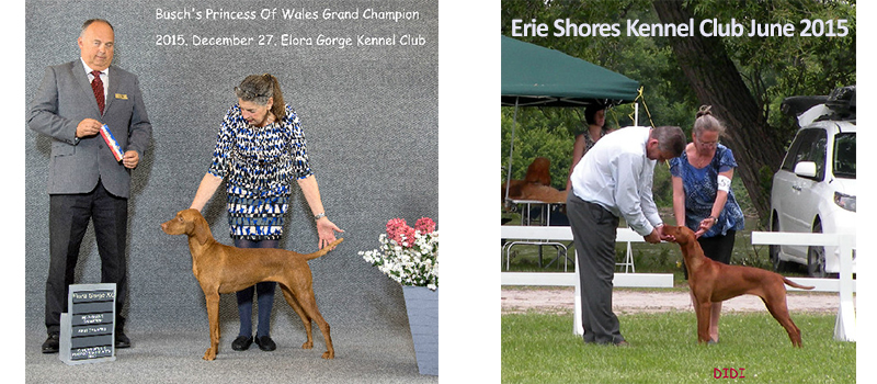Vizsla win Princess of Wales