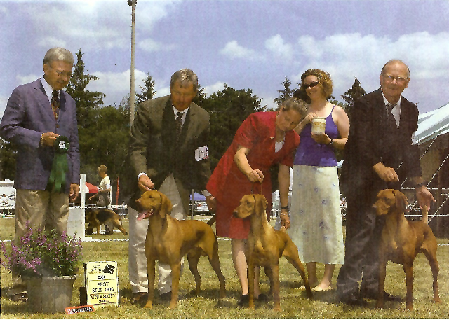 Vizsla best stud dog win